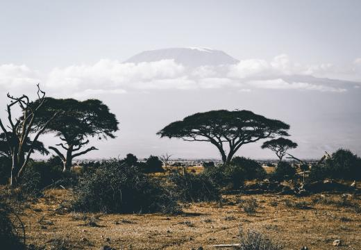 Jak uzdrowić Afrykę